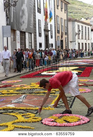 Boy working on Corpus Christi flower carpets, La Laguna, Tenerife, Canary Islands, Spain