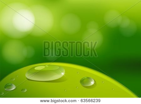 Illustration of a leaf with waterdrops
