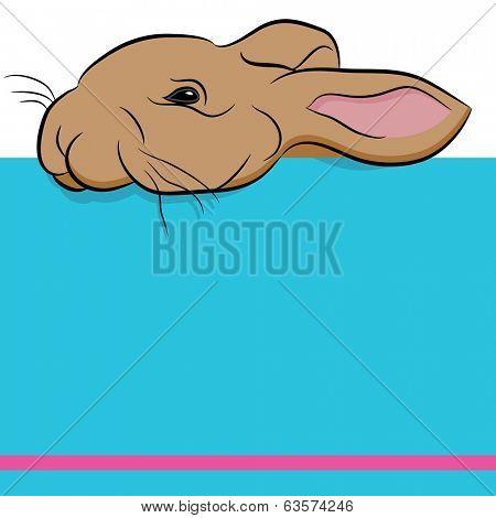 An image of a rabbit peeking over a wall.