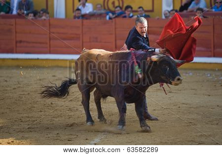 Matador And Bull In Bullfight