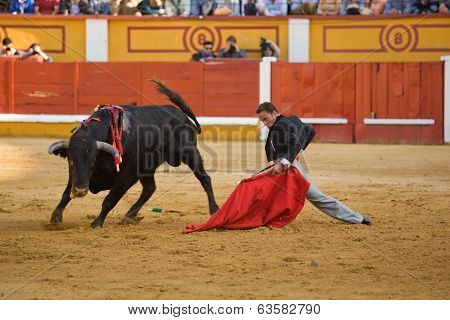 Bullfighter on his knees