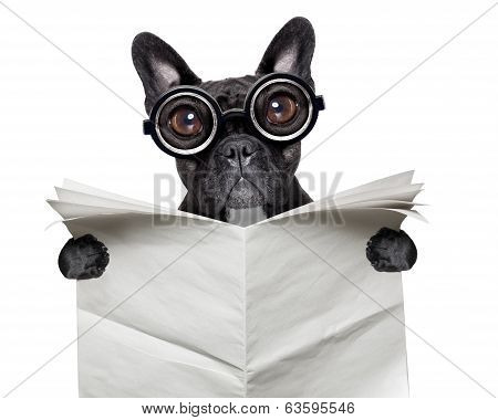 Newspaper Bulldog