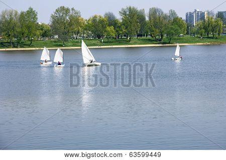 Small Boats Sailing