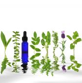 picture of essential oil  - Herb leaf selection of comfrey - JPG