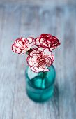 Sweet William Flowers in a Glass Bottle
