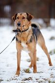 pic of mongrel dog  - Doggie on walk - JPG