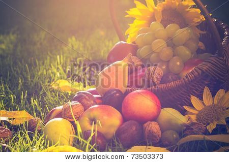 Basket Full Fruits Grass Sunset Light