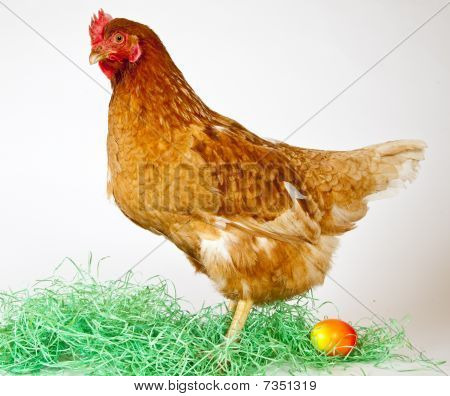 Lonely Hen With Easter Egg