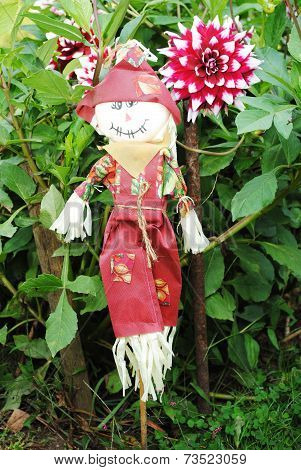 Scarecrow Protecting A Field Of Large Dahlia Flowers