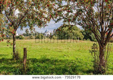 Rowan Trees On Meadow