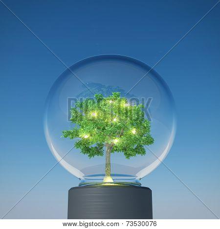 Tree Bulb Shining Under The Blue Sky