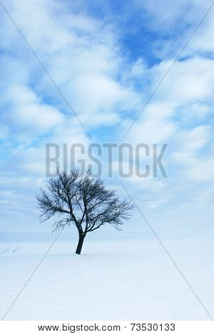 One tree in snow