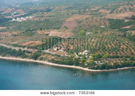 Olive Orchards In Greece