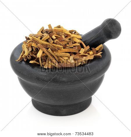 Amur cork tree bark herb used in chinese herbal medicine in a marble mortar with pestle over white background. Huang Bai. Pehllodendron.