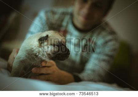 Image cute little puppy in hands of young man closeup indoor