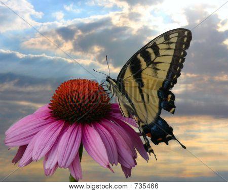 Schmetterlings- und