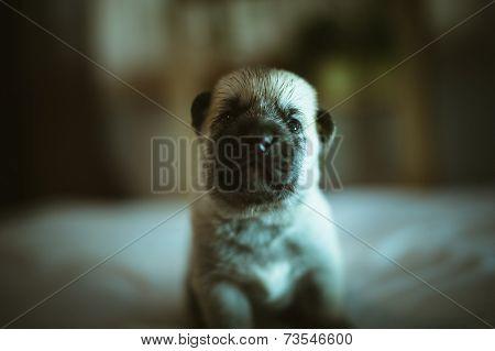 Image of cute little puppy closeup indoor
