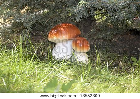 Fungus Under The Spruce