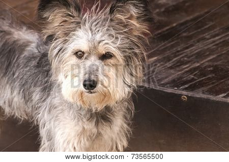 Adorable shaggy dog