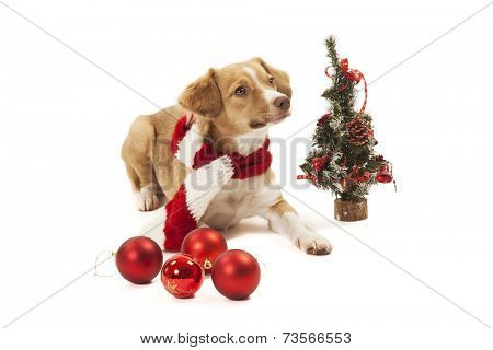 Dog with christmas cecorations.