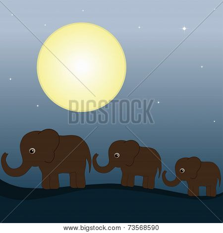 Elephant Family In The Night