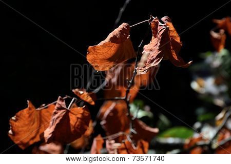 Wilting Leaves At Autumn.