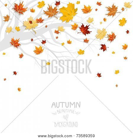 Falling leaves and branch silhouette isolated on white background