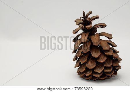 pine cone on black