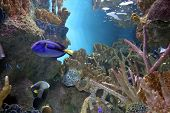 picture of saltwater fish  - aquarium view - JPG