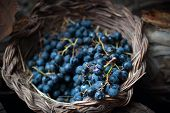 stock photo of stomp  - isolated clusters of grapes on wicker basket - JPG