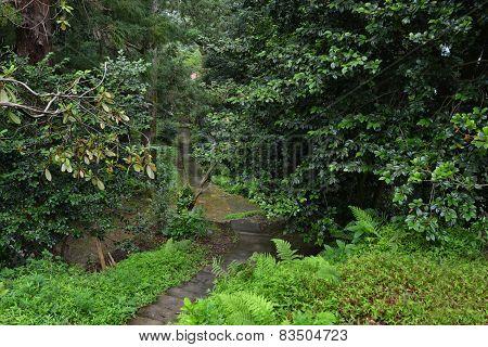 Pathway In Botanical Garden Georgia Batumi