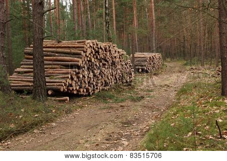 Felling of trees.