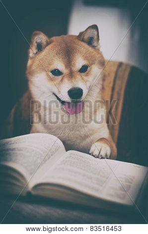 Vintage Photo Of Shiba Inu Dog With Book