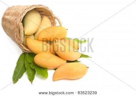 Fresh Ripe Mangoes With Green Leaves