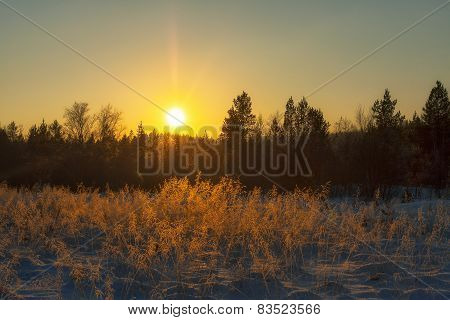 Winter Sun Over The Forest