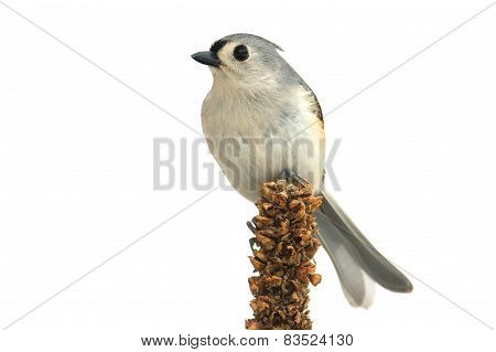 Isolated Titmouse On A Branch