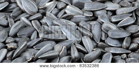 Many Of Sunflower Seeds Background