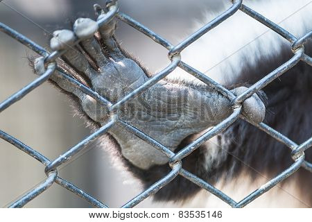 Hand Animal In Cage