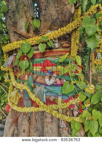 Holy Bodhi Tree