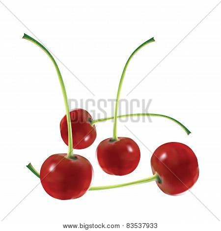Four appetizing mature cherries