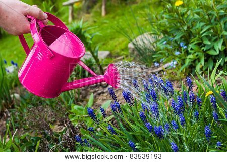 Spring Works Garden Watering Plants Watering Can