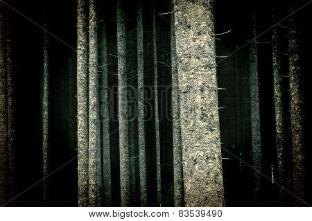 Brightly Lit Trees In Forest