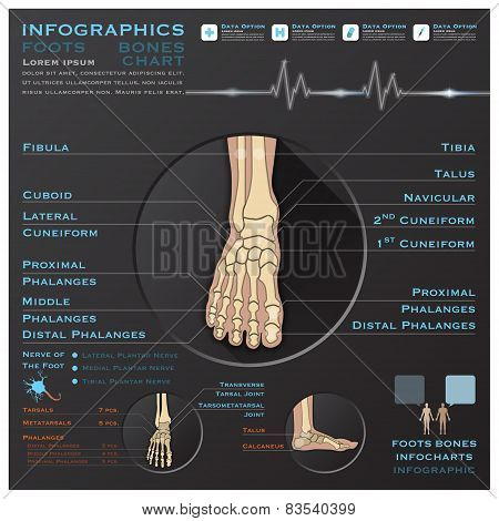 Foot Bone Skelatal System Infographic Infocharts Health And Medical