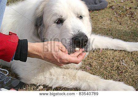 Woman Feeds Elderly Dog