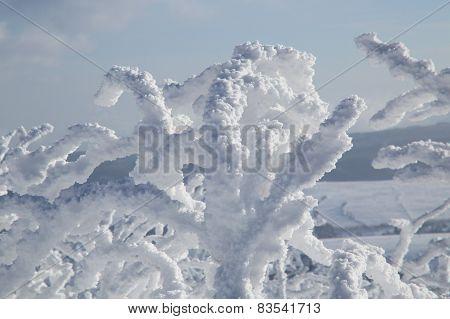 bush with snow