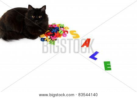 Black Cat Lies On The Letters With The Word Sale