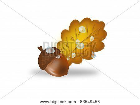 Acorn And Leaf Of Oak Tree