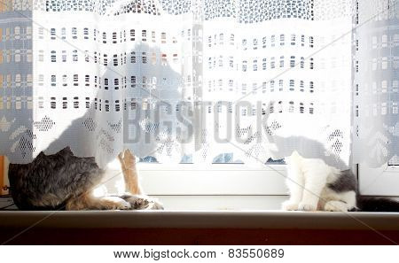 Dog And Cat Behind Curtain