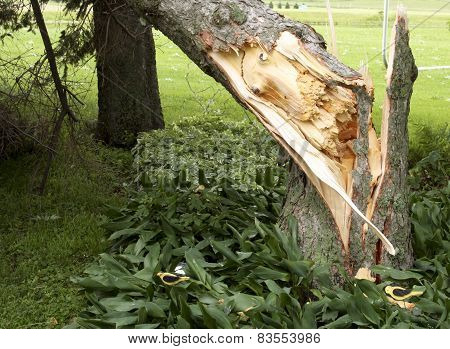 Splintered Storm Damaged Tree