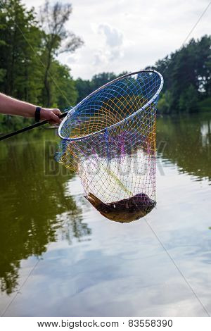 Landing Net With Caught Fish